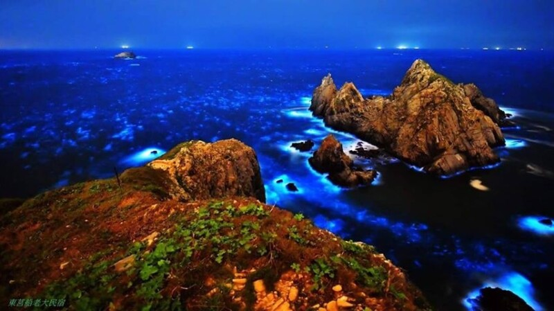 此生必看美景!「馬祖藍眼淚」現正大爆發,整片藍色螢光海宛如仙境,最佳觀賞時間、地點完整公開
