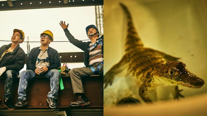 台劇《做工的人》被讚「看著看著就想哭」!寫實刻畫市井小人物的堅毅精神,劇中小鱷魚成最火新演員