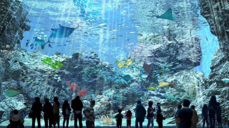 桃園XPARK水族館8月開幕!超夢幻展區、票價、交通資訊曝光