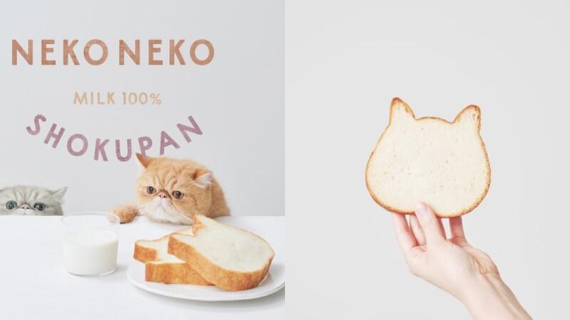 日本IG超紅貓咪生吐司來了!《NEKO NEKO SHOKUPAN》台灣快閃店9月登場