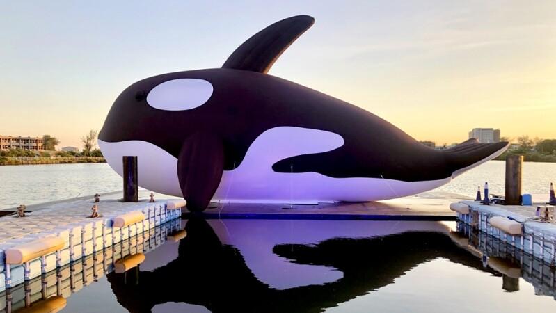 全球最大虎鯨在台南!「安平虎鯨嘉年華」登場,20公尺呆萌虎鯨游進安平港,還有水上樂園、煙火秀必朝聖