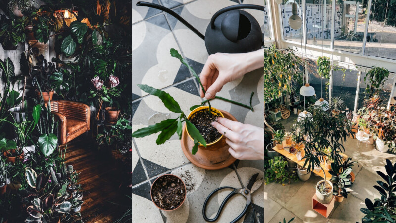 五個植栽IG帳號,給你滿滿的靈感打造獨一無二的綠色療癒空間