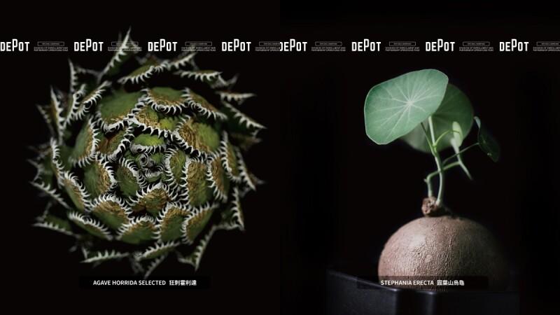 風格選物名所INVINCIBLE質感打造生活美感品牌DEPOT開展「珍稀塊根植物」市集