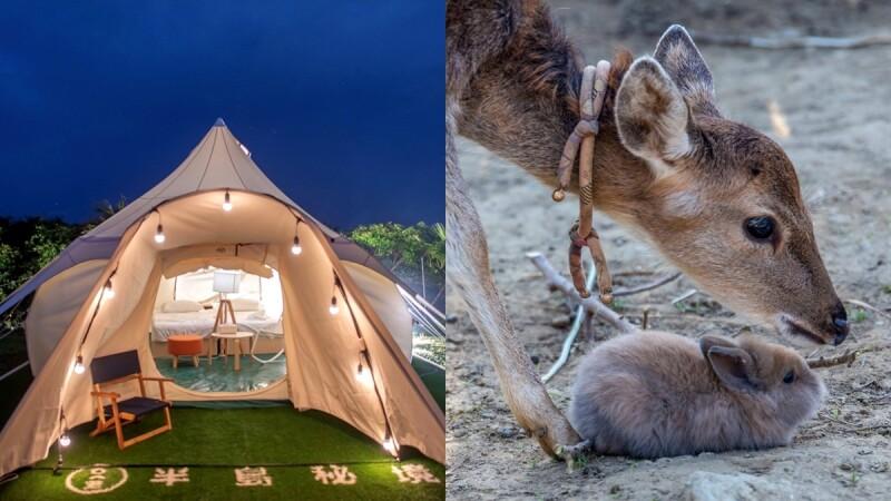 中秋節連假去哪玩?盤點5大賞月景點,露營數星星、夜訪梅花鹿超難忘