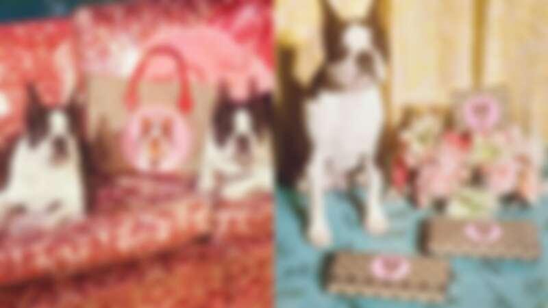 狗狗本人加入大片拍攝Q炸了!13款Gucci狗年限定禮物清單來了