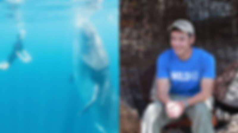 阮經天拍攝《溫柔的巨人》為守護鯨鯊發聲!與鯨鯊共遊珍貴影像曝光,呼籲大家拒吃魚翅